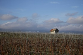 hut-in-the-vineyards