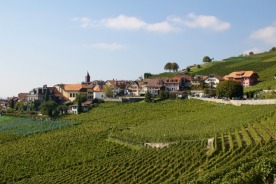 The Lavaux vineyards date from the 11th century.